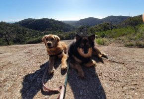 Two dogs sitting on a soil at the mountain